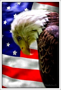 Sad flag and eagle
